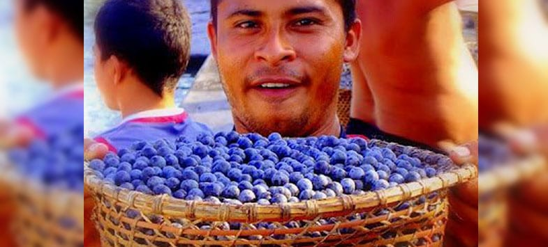 Healthiest Foods acai berries
